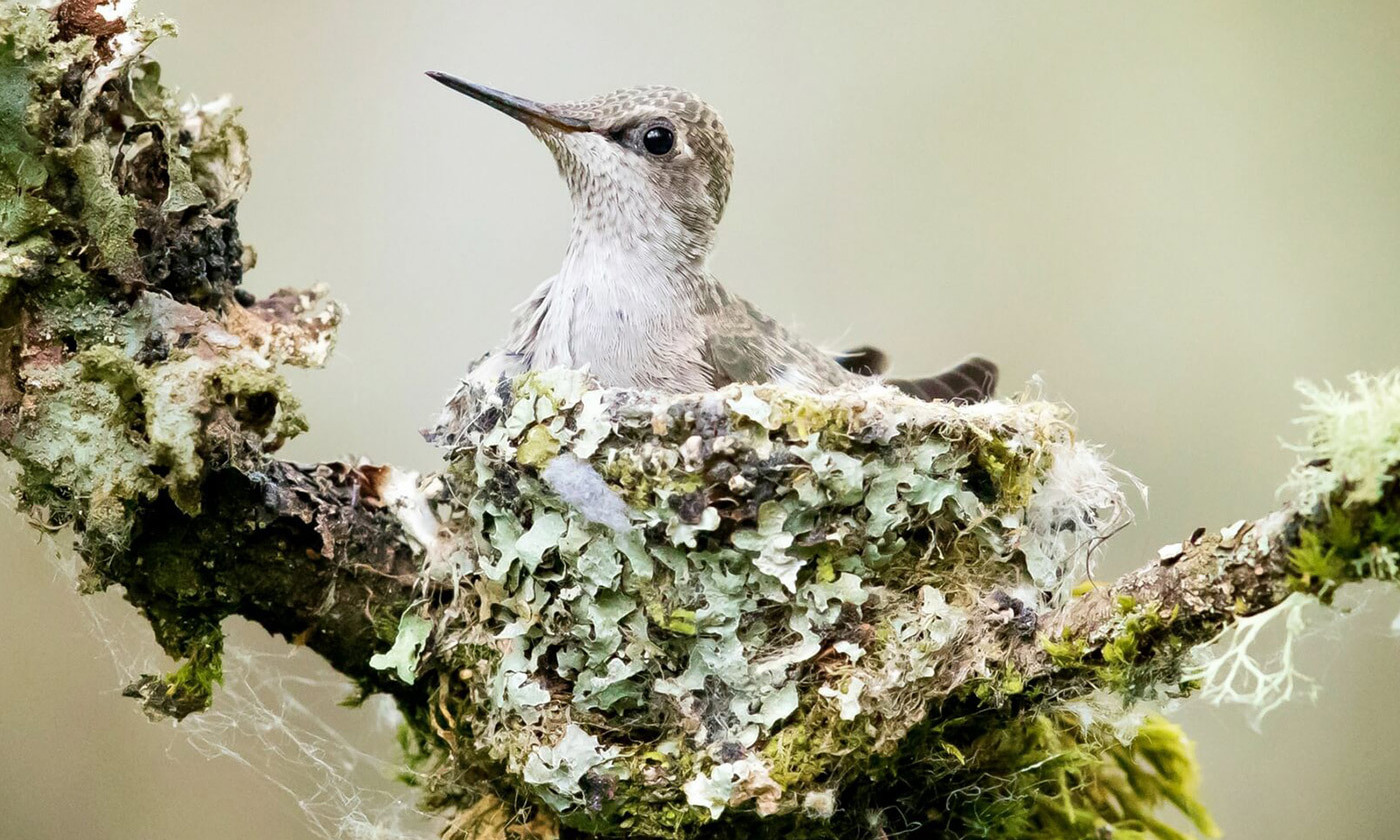 Conscientiousness in Animals, Explaining Tidy Birds and Neat Bees