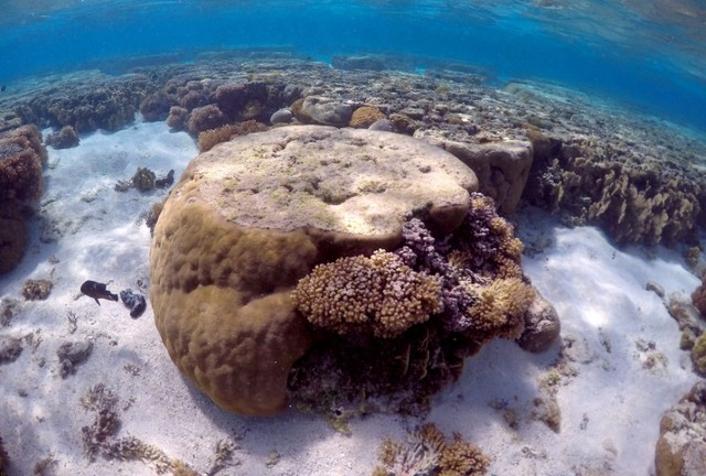 Corals at Risk as Marine Heat Waves Strike More Often