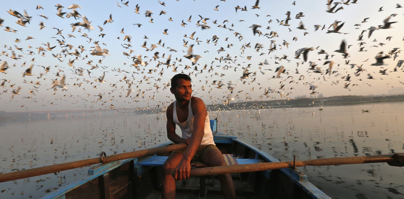 Why Blaming Migratory Animals for Global Disease Is a Step in Haste