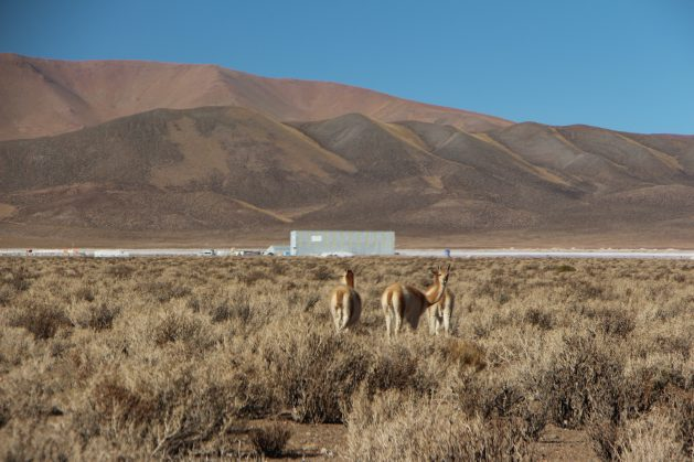 The llama is the animal best adapted to the arid conditions of the Argentinean region of the Puna de Atacama. The photo shows a group of llamas near a salt flat where exploration for lithium is being carried out. Credit: Mining Chamber of Commerce of the Province of Jujuy