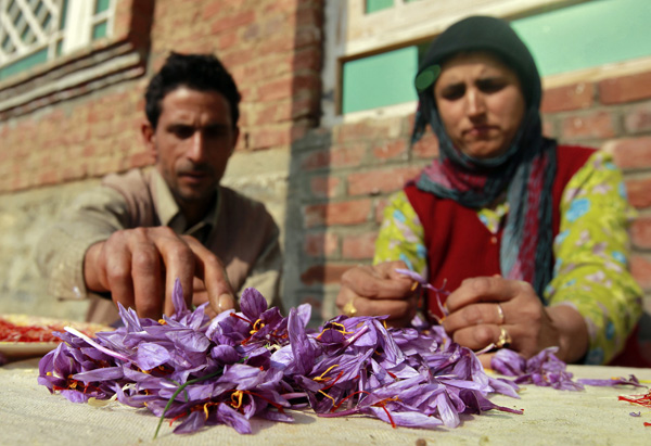 A Kashmiri family separates and collects stigmas from saffron flowers at their home in Pampore. Credit: Reuters