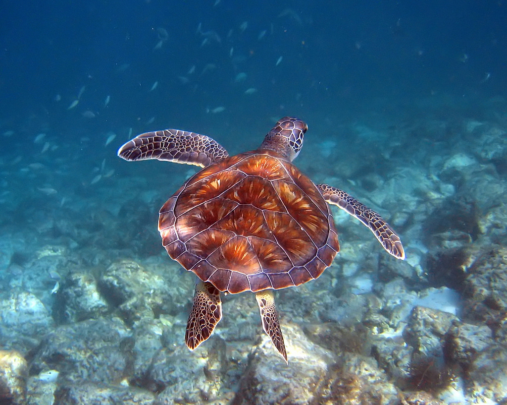How Can We Stop the Feminisation of Sea Turtles in the Northern Great Barrier Reef?