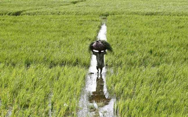 Will India's Contract Farming Ordinance Be a Corporate Lifeline for Agriculture?