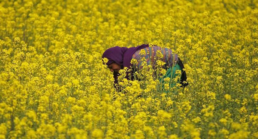 Expert Gyan: Is Budget 2018 Really Putting Farmers First?