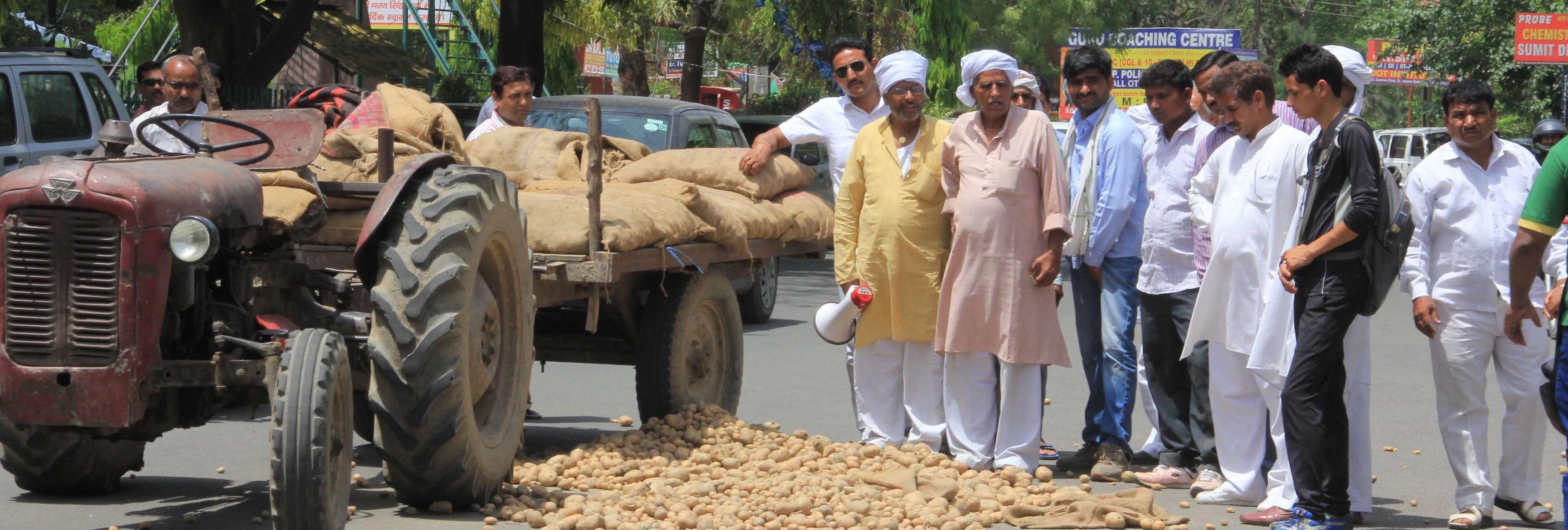 Uttar Pradesh's Hot Potato: Another Farm Crisis Ignored