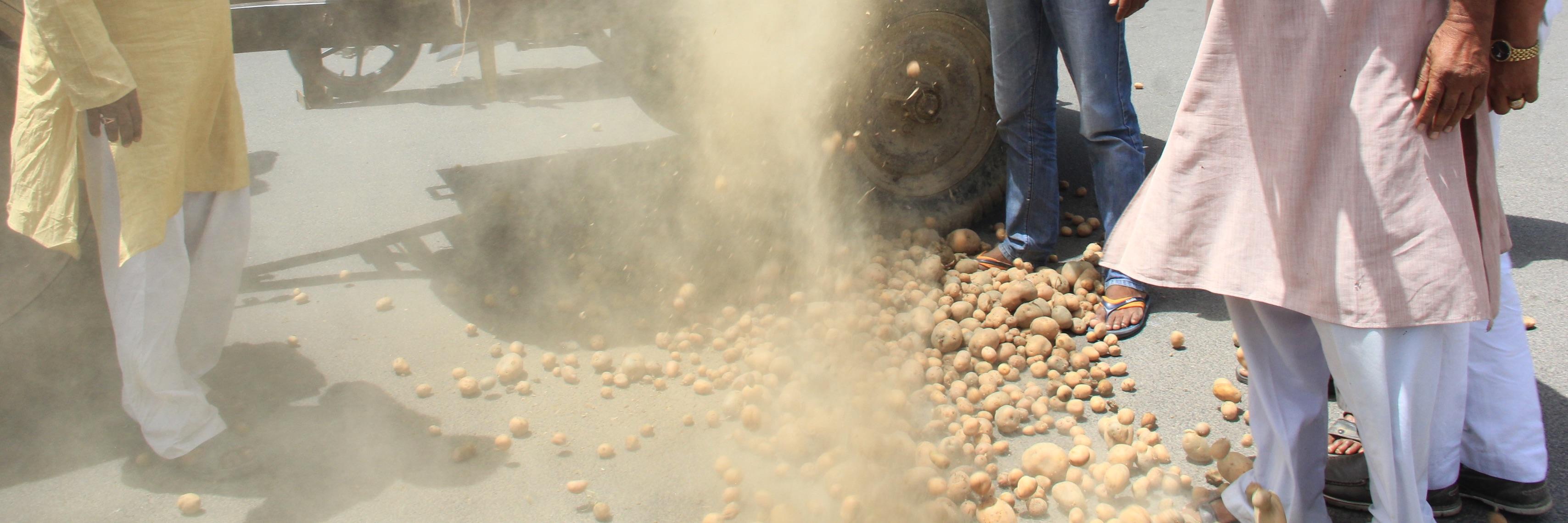 Demonetisation Triggered the Current Crisis in UP's Potato Market
