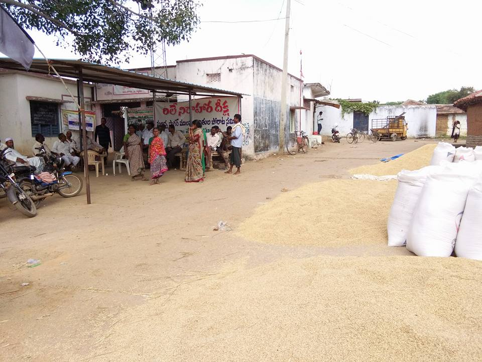 Harvested rice and cotton left to dry in front of the makeshift protest site. Credit: Raksha Kumar