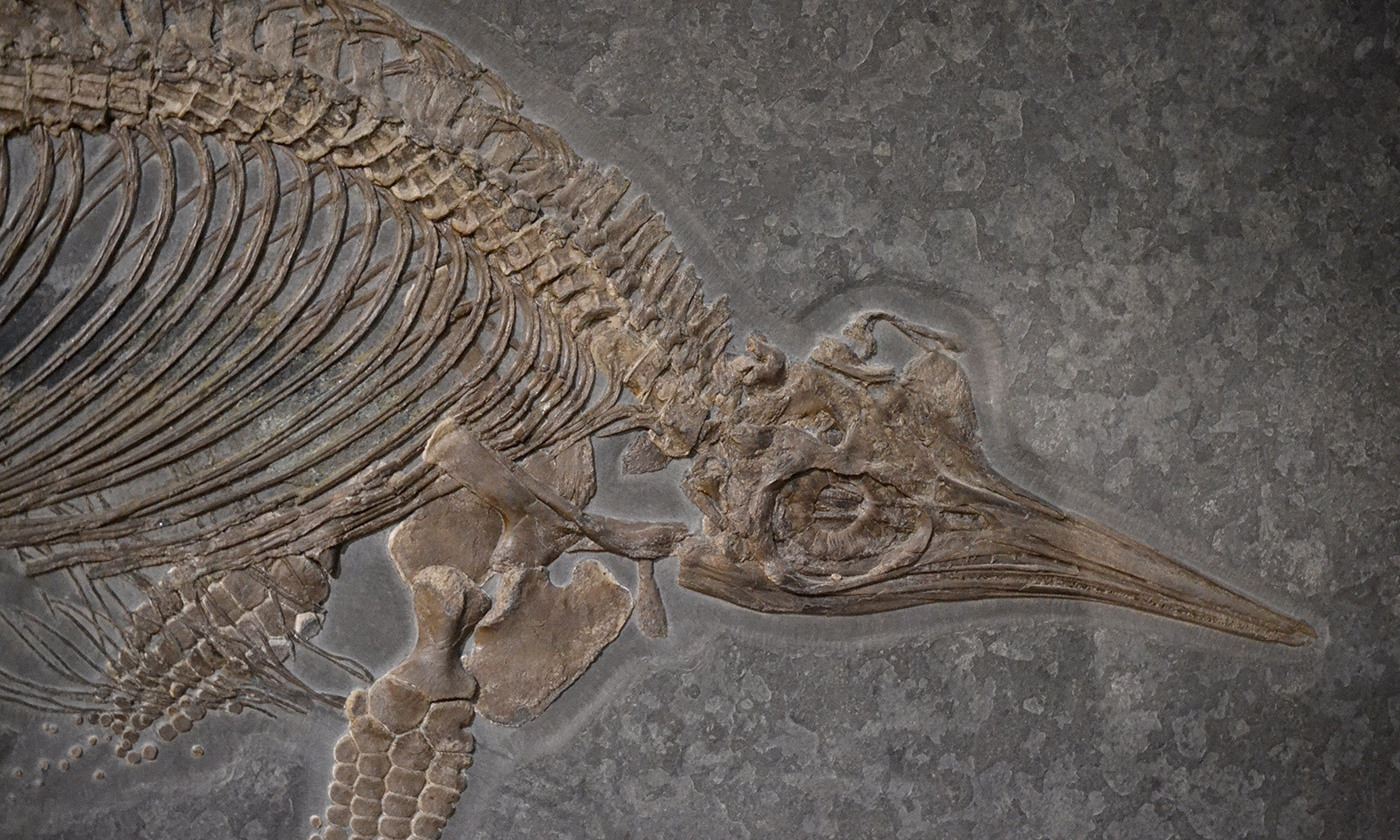 What a Fossil Revolution Shows About the Evolution of 'Big Data'