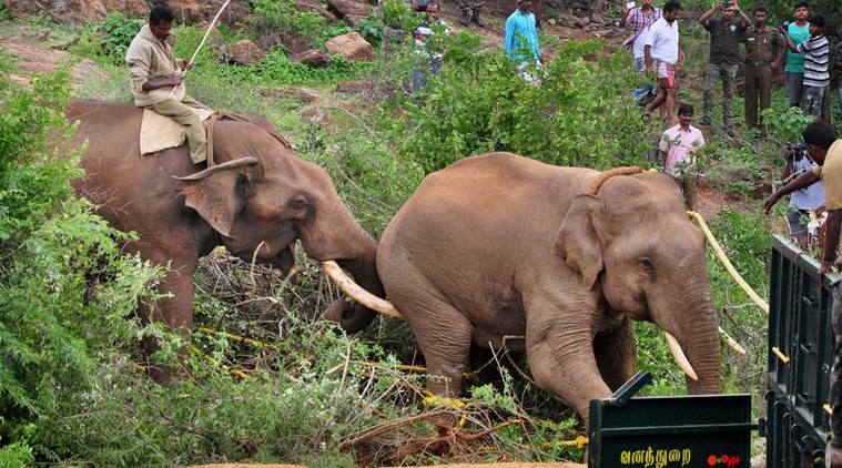 IFS Officer Trampled by Elephant in Nagarhole Tiger Reserve