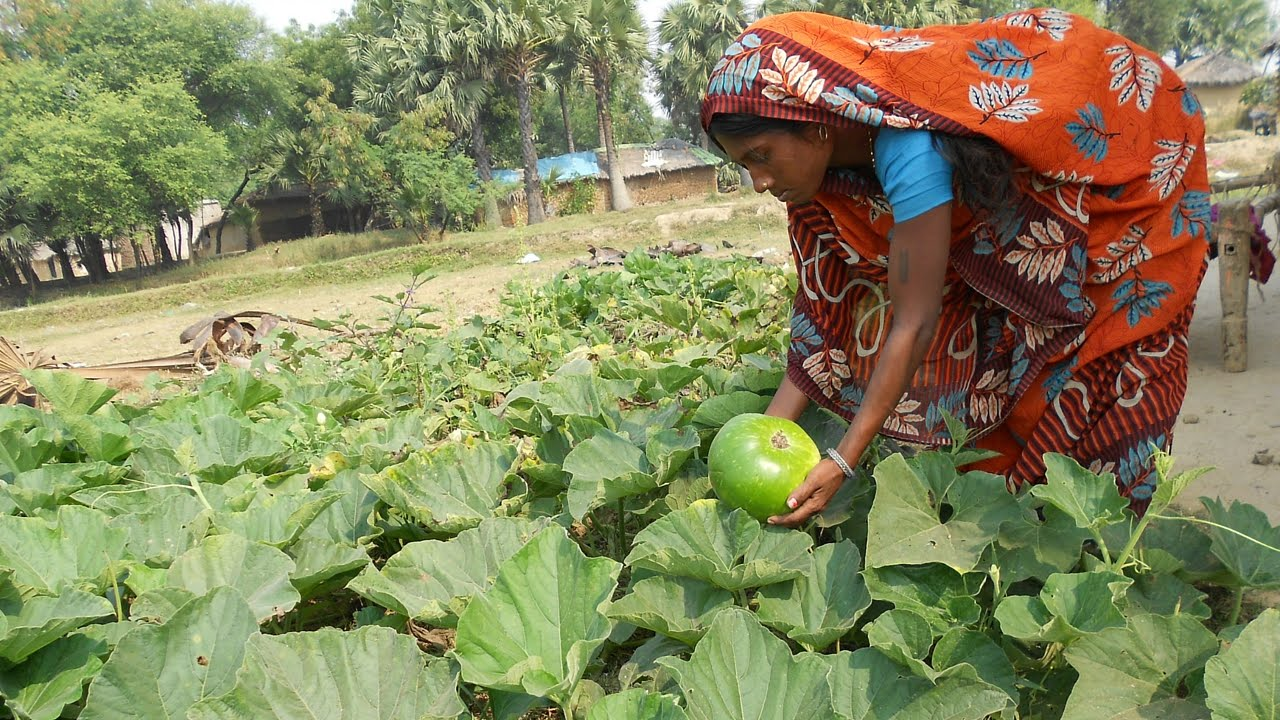 Kitchen Gardens That Bring Nutrition, Livelihood Support and Protect Seeds