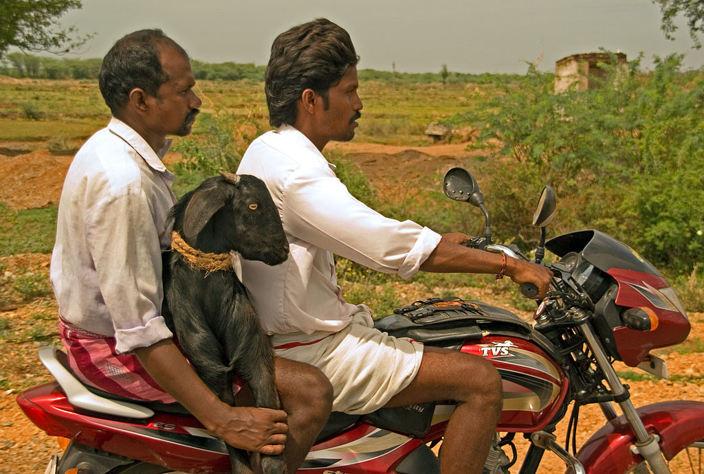 Rural India Struggles With High Road Accidents But Low Access to Emergency Care