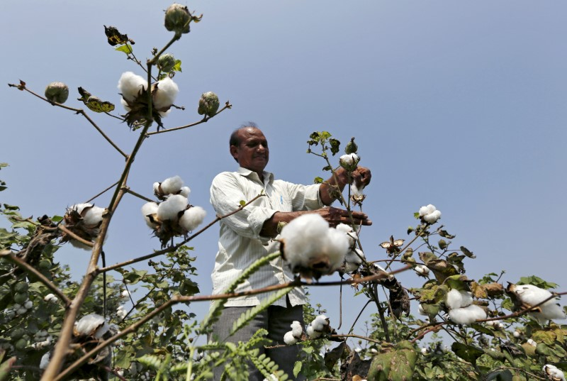 India Cuts Monsanto's GM Cottonseed Royalty by 24% May Trigger Another Row