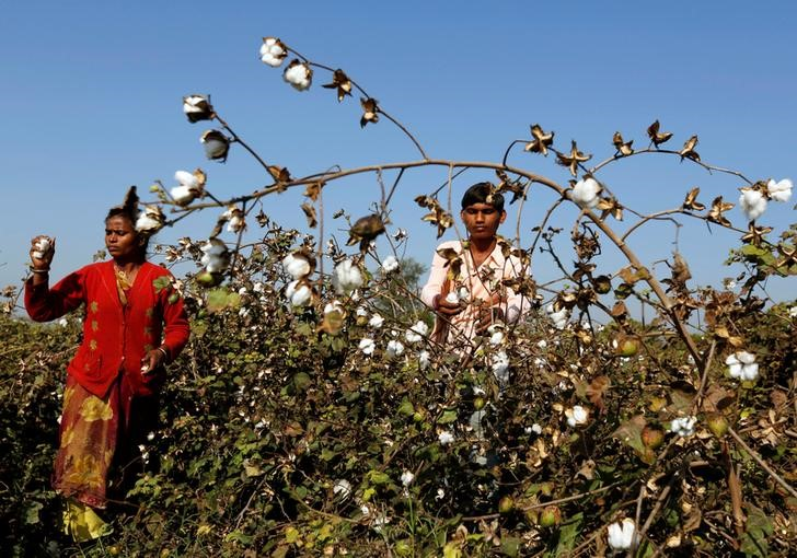 Backgrounder: The Laws Surrounding Monsanto's Claim to the Bt Cotton Patent