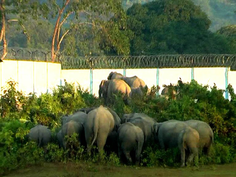Elephant Corridor Near Kaziranga Remains Blocked Even After SC Order to Remove