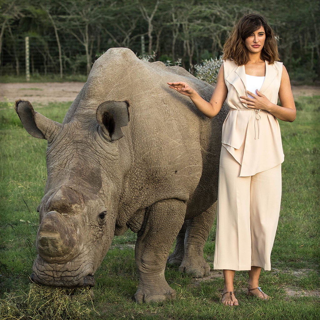 Nargis Fakhri with Sudan at Ol Pejeta in 2015. Credit: Wikimedia Commons
