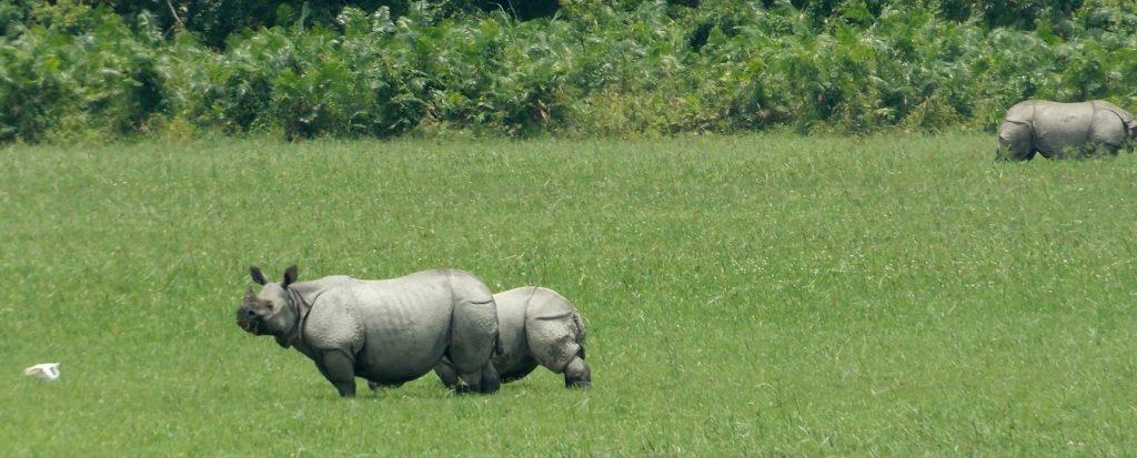 RTI Activist Group Alleges Fudging of Rhino Census Data