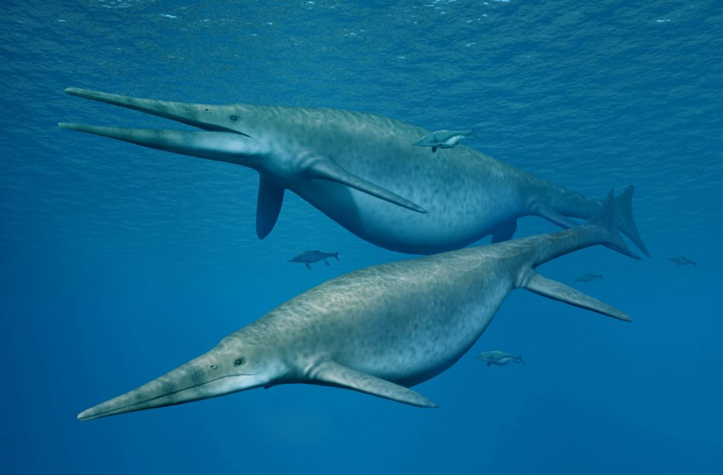 Giant ichthyosaur is one of largest animals ever