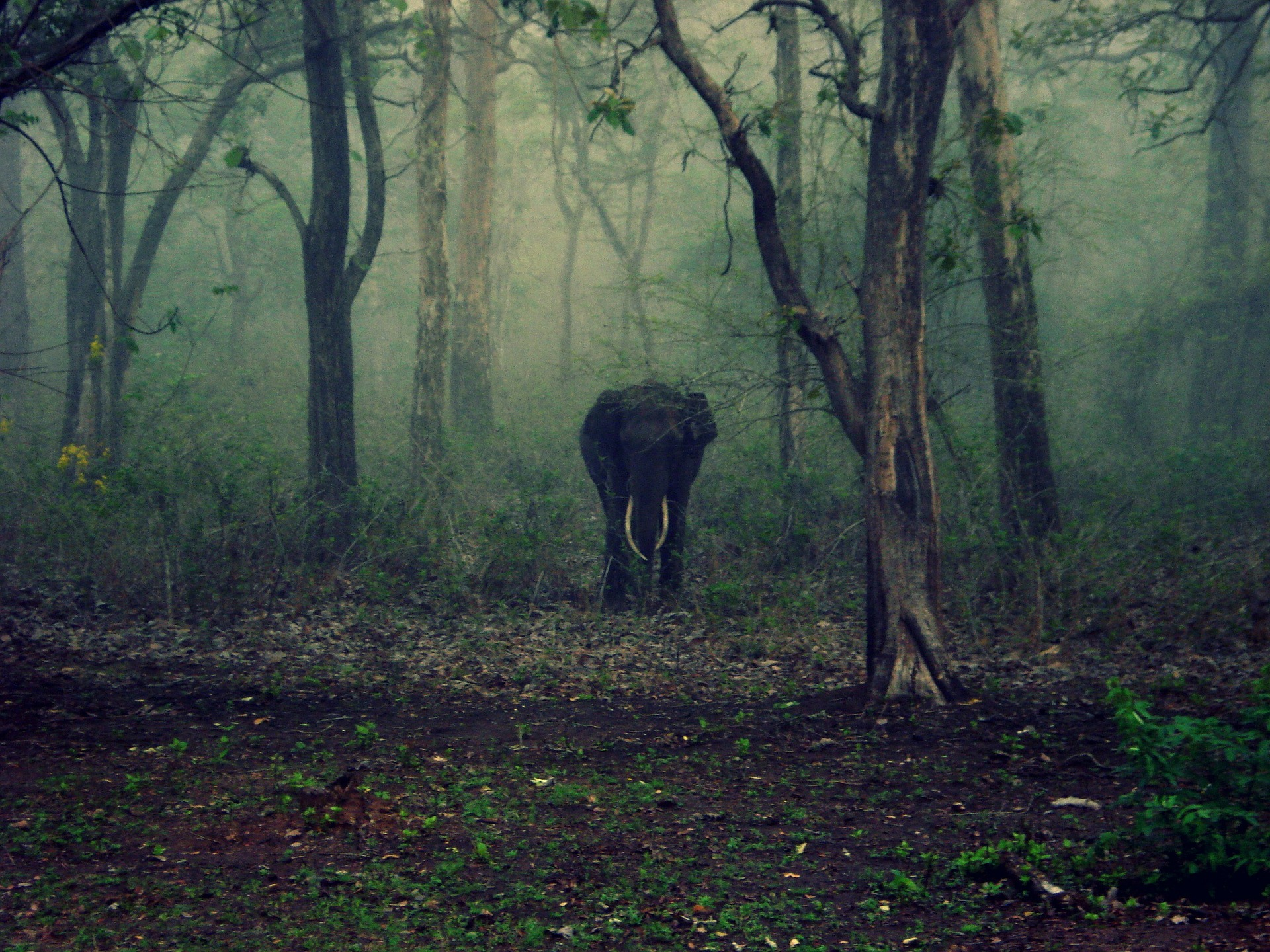 There is perhaps no large wild animal that dies unnaturally in such large numbers in single events as do elephants due to collisions with trains. Credit: walterjenny86/pixabay