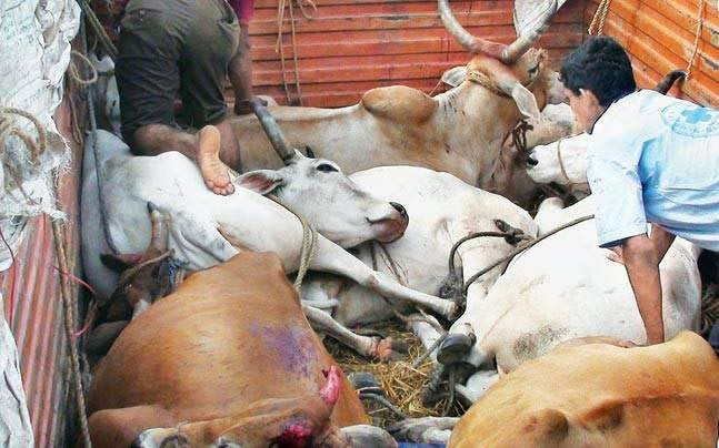 Cattle-Skinners in Bundelkhand Are Looking For an Out