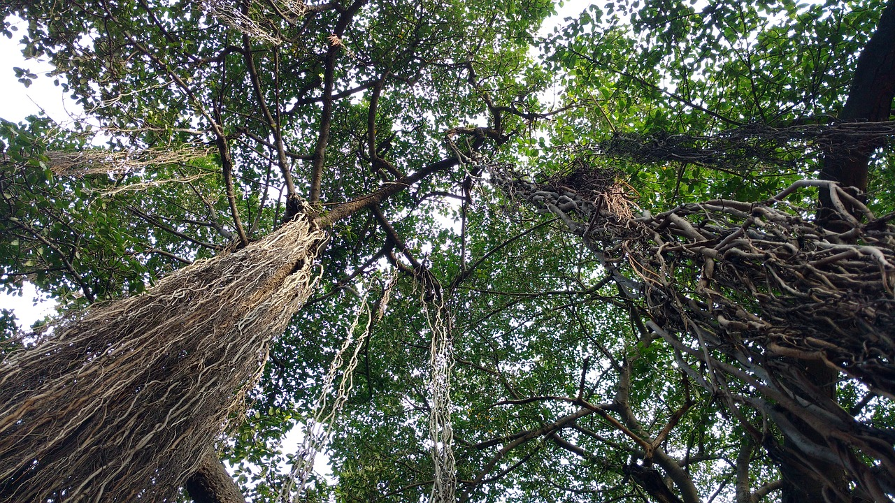 The Trees of Life That Became Colonial India's Agents of Death