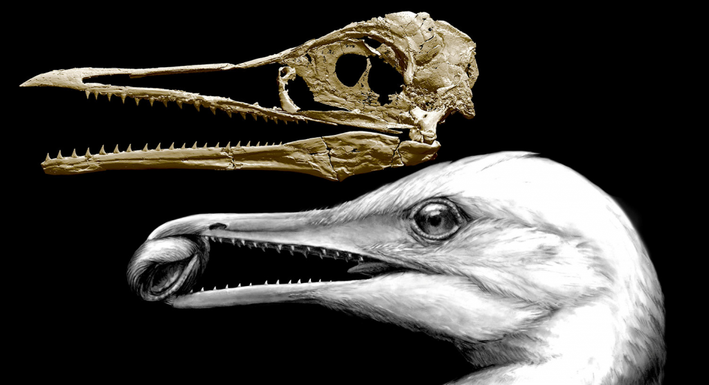 Ichthyornis Dispar Shows What Bird Beaks First Looked Like