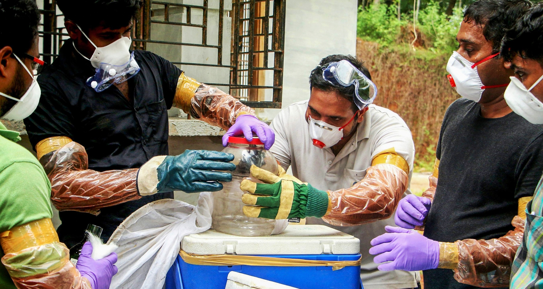 Nipah Virus Claims Ten Lives in Kerala, Including Nurse