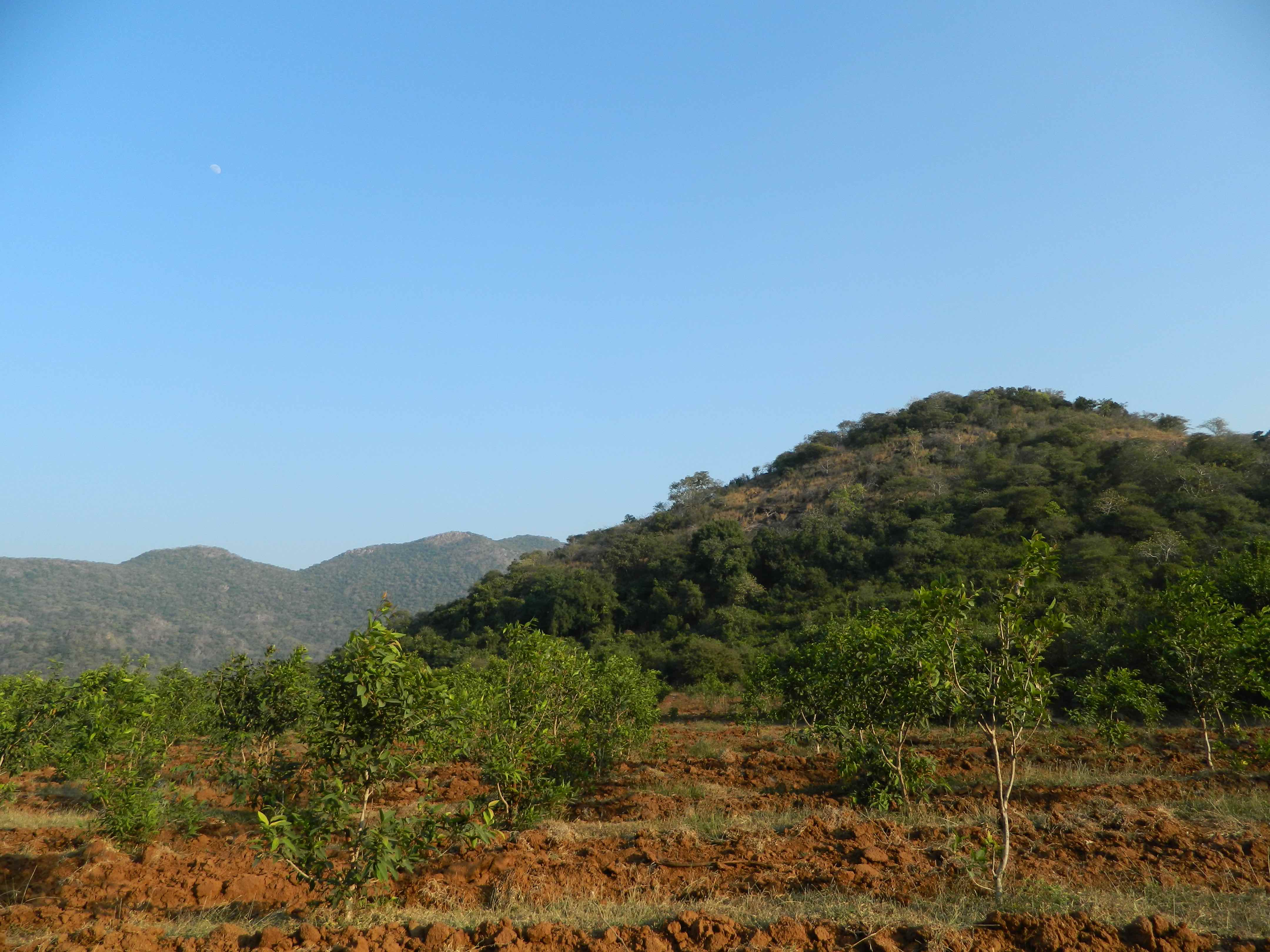 Afforestation initiatives in the adjoining wasteland areas of a forest. Credit: Reshma M Ramachandran.