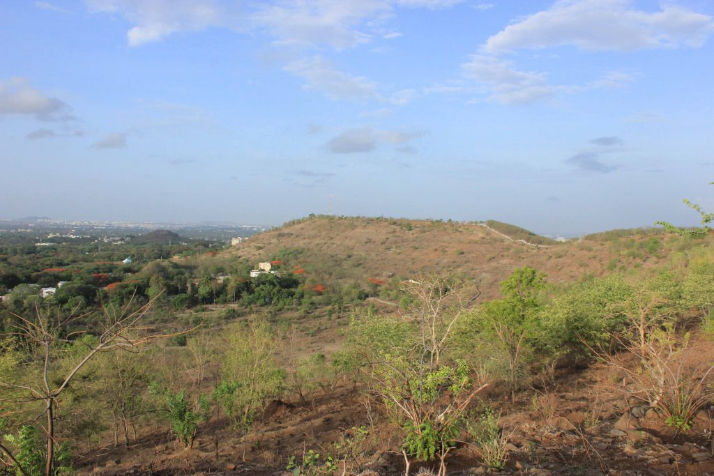 Open Savannahs Versus Wooded Thickets – What's the Future for Pune's Hills?
