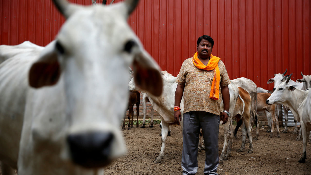 Kanpur Diary: No More Waiting Till the Cows Come Home