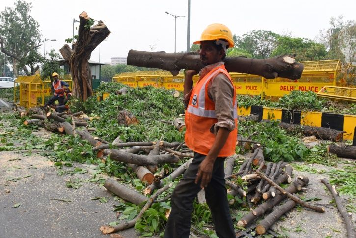 AAP Hails High Court Stay on Cutting Trees, Asks Centre to Scrap Redevelopment Project