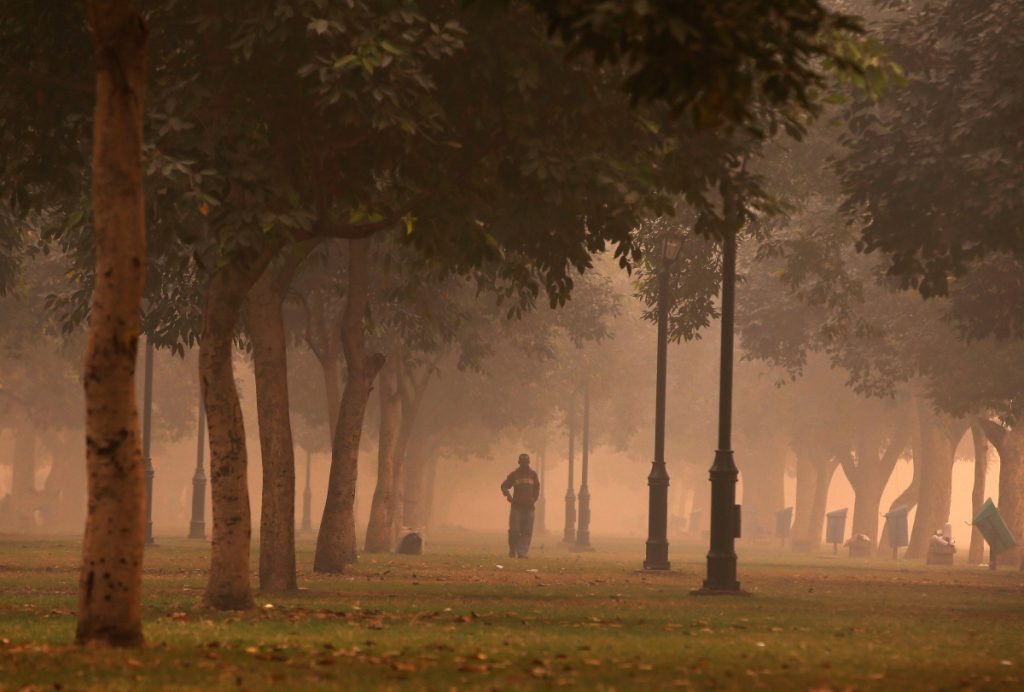 Watch: The Fight to Save Delhi's Trees