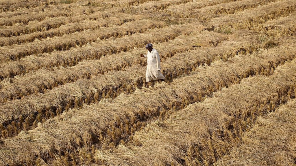 Farmers' Crisis: Are Loan Waivers, MSP Hikes, Assured Income the Solutions?