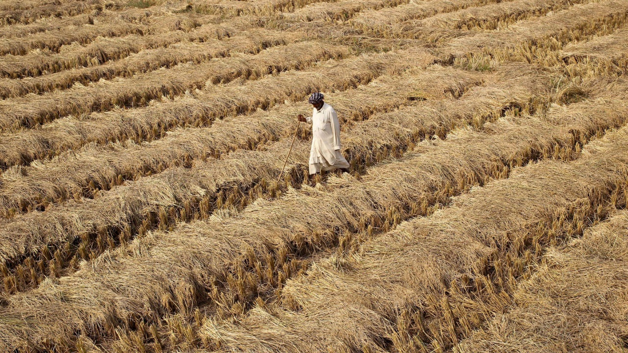 Despite Increased Average Income, Farmers' Debt Remains an Issue