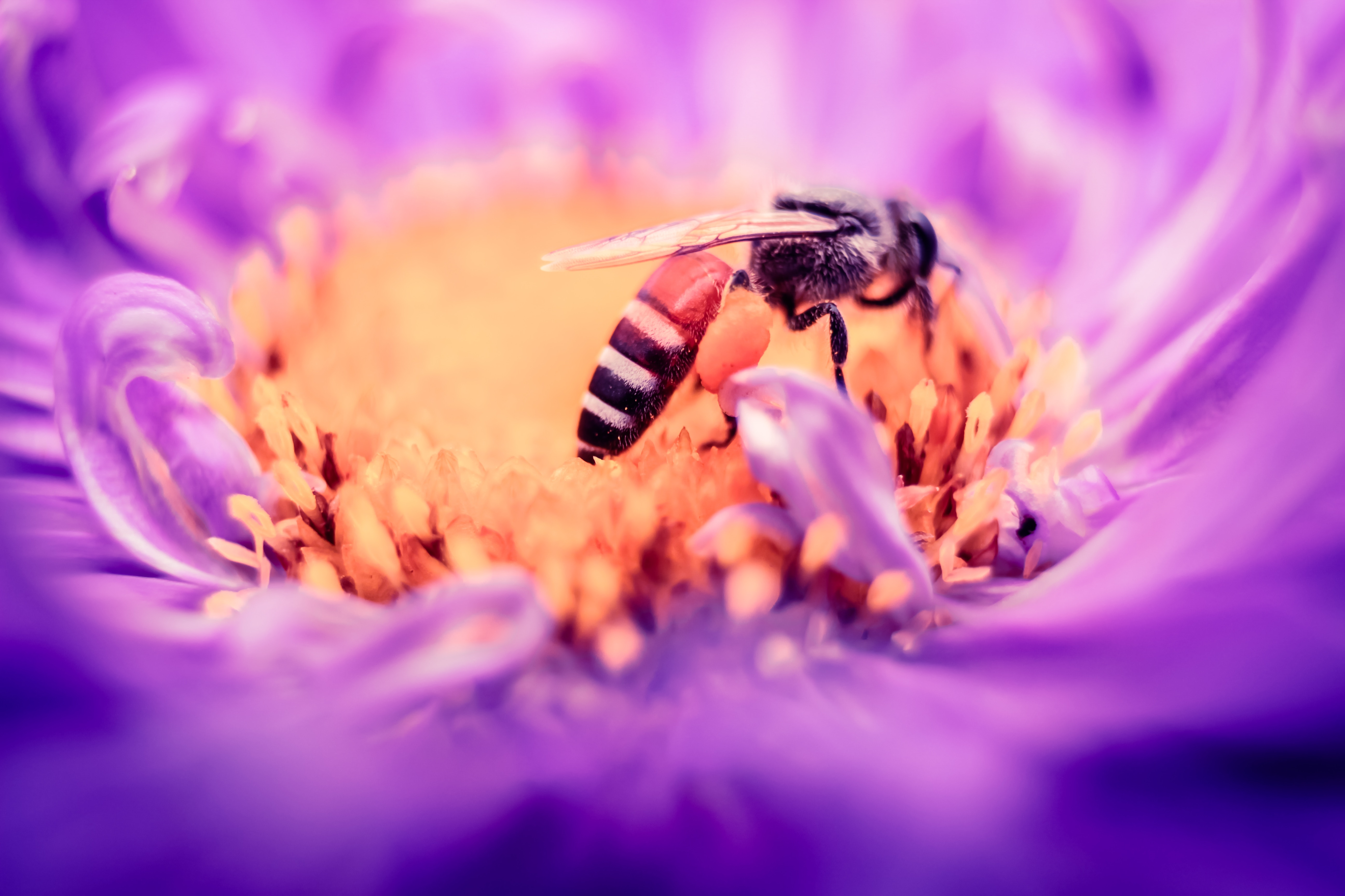 Scientists Didn't Think Insects Could Grasp Zero. Bees Proved Them Wrong.