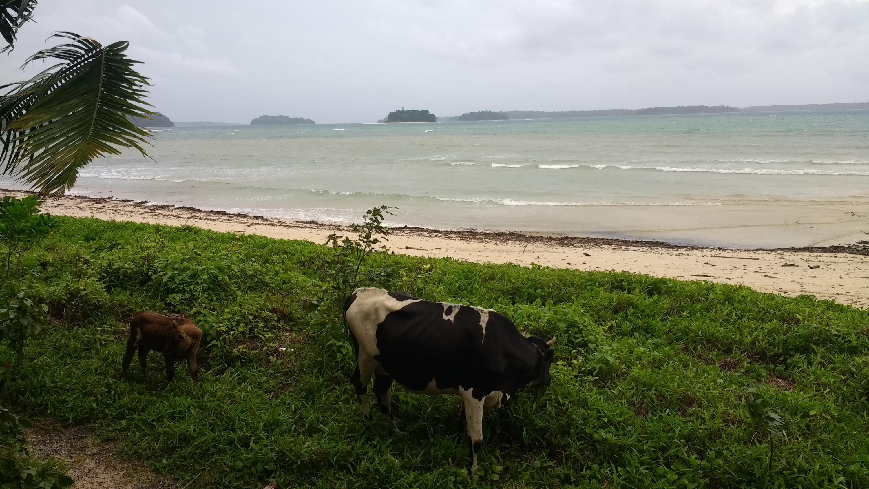 Study islands on the horizon. Credit: Krishna Anujan