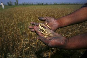 Modi's Flagship Crop Insurance Scheme Wavering as Farmers Continue to Suffer