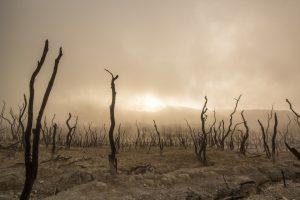 Is Global Warming Making Us Sicker?