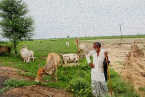 For Mewat's Muslims, Cows Now a Source of Both Livelihood and Fear