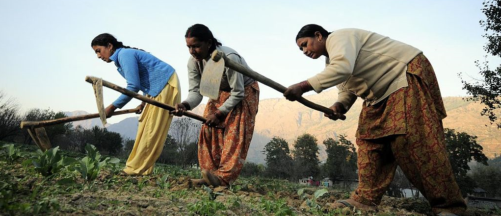 Will Modi's New Farmer Income Scheme be the Band-Aid that Indian Agriculture Needs?
