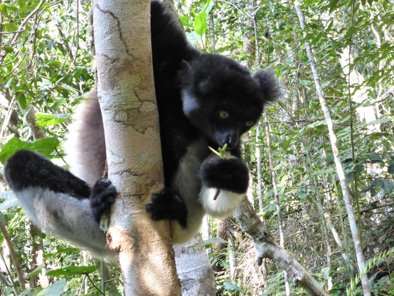 Forest Communities Pay the Price for Conservation in Madagascar