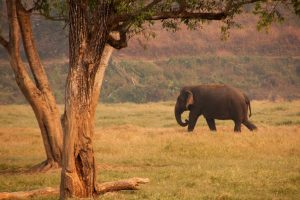 The Special Ingredient That's Kept a Rainforest Tree Going: Elephant Poop