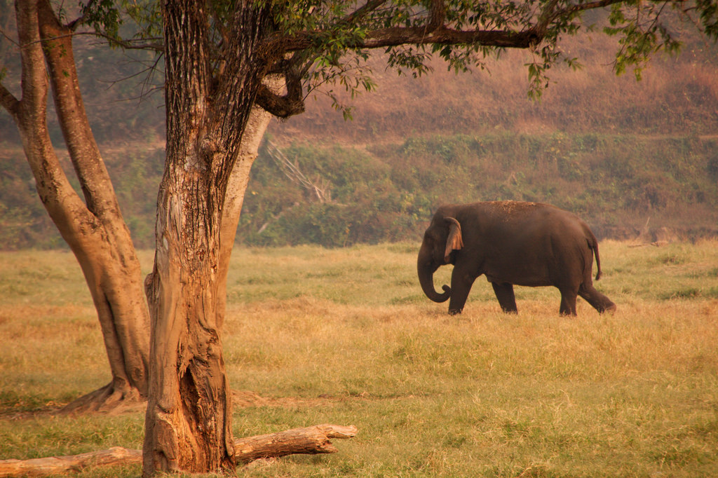 Elephants are the 'gardeners of the forest'. Credit: christianhaugen/Flickr, CC BY 2.0