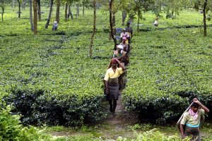 West Bengal's Striking Tea Plantation Workers Are Only Demanding Their Basic Rights