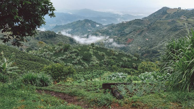 Climate Change Dawns Upon the World's Third Largest Coffee Industry