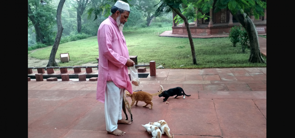 From Queens to Jinns, the Mystical Cats of Agra's Sandali Mosque