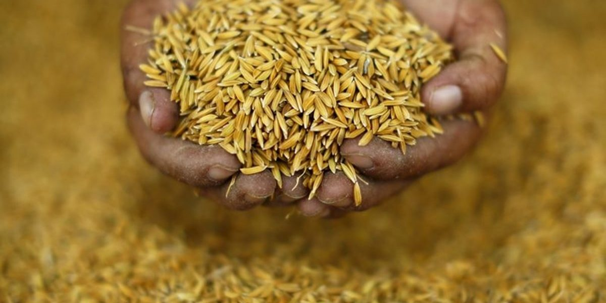 In the Year of Millets, Coarse Grains Remain Neglected Despite Nutritional Benefits