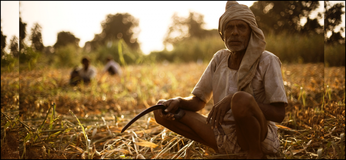 How the PM's Crop Insurance Scheme Turned Into a Goldmine for 10 Private Insurers