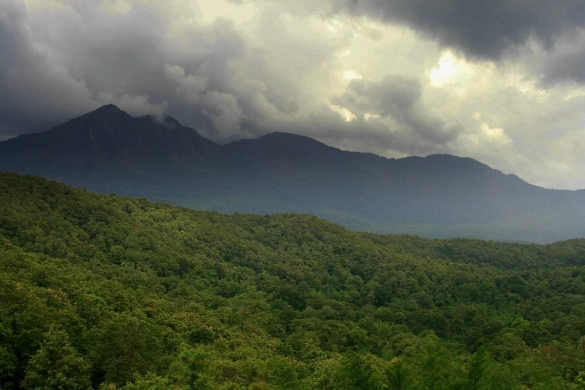 The Parambikulam forest in Kerala is a part of the Western Ghats. dotcompals/Flickr, CC BY 2.0