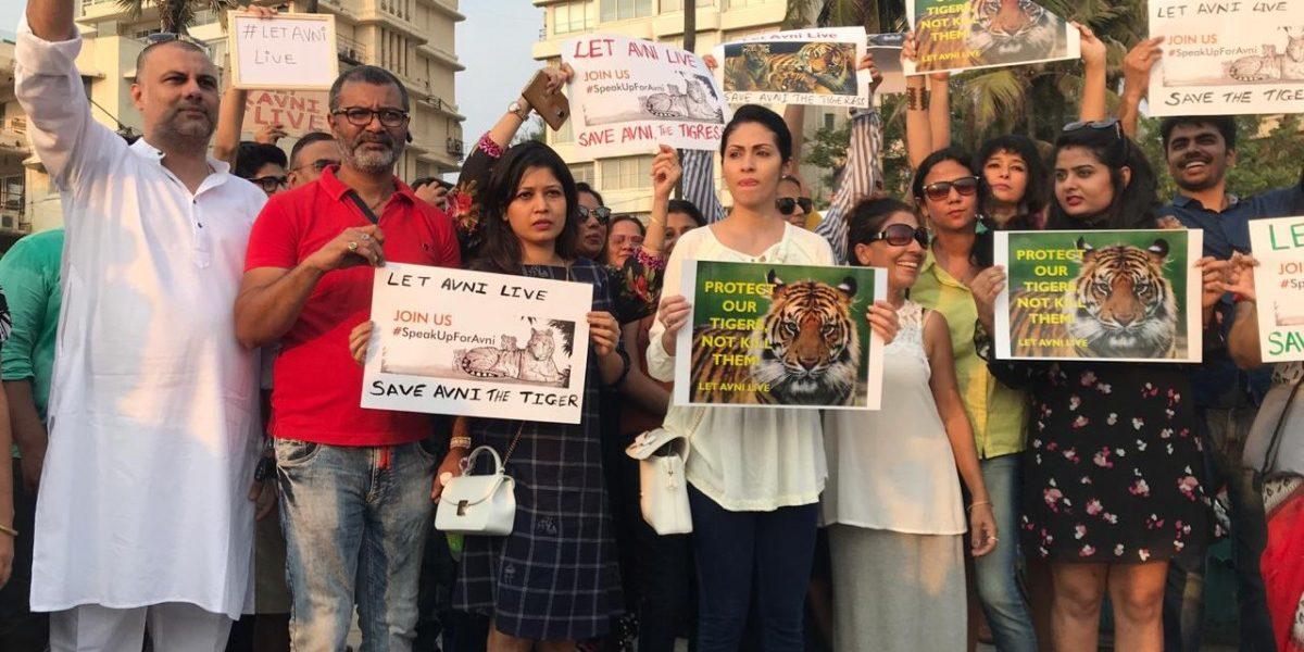 Activists Suspect Maharashtra's Motives to Kill Tigress Avni