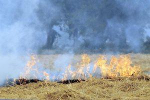 As Winter Looms, the Rashtriya Gokul Mission Should Evangelise Converting Crop Residue to Fodder